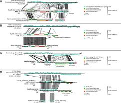 ecology and evolution of viruses infecting uncultivated sup05