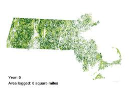 Massachusetts forest images Massachusetts forest impacts if proposed biomass incinerators are gif