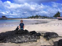 iguana island galapagos visitors photo gallery