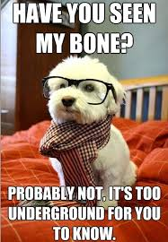 Hipster Cat Meme - hipster dog meme have you seen my bone daily picks and flicks