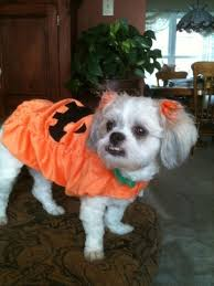 Halloween Pet Costume 31 Halloween Pet Costume Contest Images