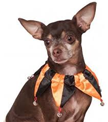 Court Jester Halloween Costume Amazon Zack U0026 Zoey Court Jester Joker Female Dog Mardi