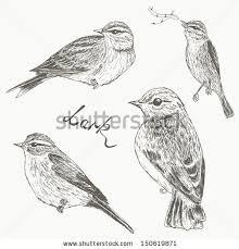 bird sketch stock images royalty free images u0026 vectors shutterstock