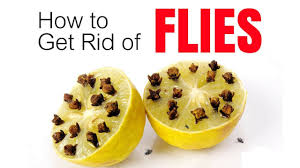 how to get rid of flies quickly inside and outside youtube