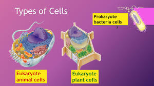 the cell ap biology ppt video online download