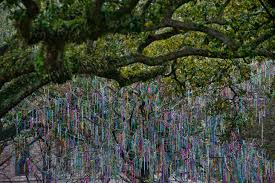 mardi gras trees it s carnival time bead tree on uptown cus only at tulane