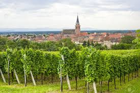 bergheim bas rhin alsace france panoramic view with vineyards