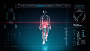 Full Body Muscle Anatomy Futuristic Interface Display Of Full Body Scan With Human Anatomy