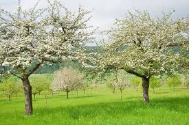best time for spraying trees when to spray fruit trees