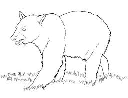 articles polar bear coloring pages adults tag bear