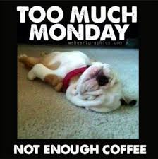 Too Much Coffee Meme - pretty too much coffee meme 1000 images about funny animals on