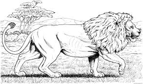 walking african lion hard coloring pages printable