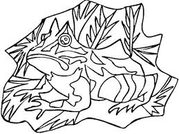 poison dart frog coloring free printable coloring pages