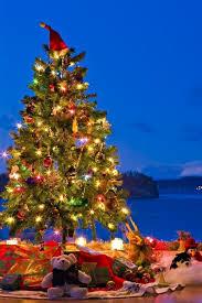 christmas tree card photo information