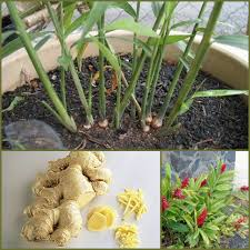 garden decoration ideas homemade beautiful and easy diy vintage garden decor ideas on a budget you