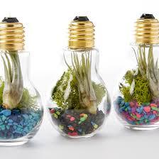 diy light bulb terrarium u2013 adorable home