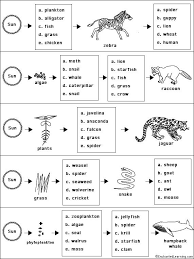 food chains worksheet free worksheets library download and print