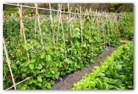 Garden Layout Planner Looking How To Design A Vegetable Garden Layout Kitchen