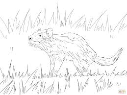 tasmanian devil coloring pages free coloring pages