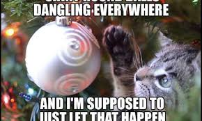 Funny Cat Memes - funny cat memes archives kitty humor