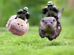 Star Wars Cat Meme - meme mashup