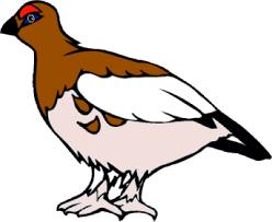alaska bird us states edition countryreports