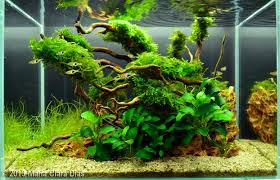 5 gallon 2013 aga aquascaping contest entry 359 aquatic