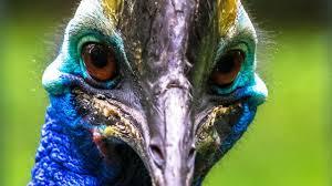 badass animals national geographic channel international