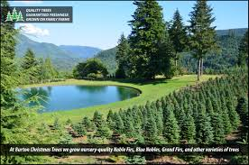 burton christmas trees grown in washington state on family farms