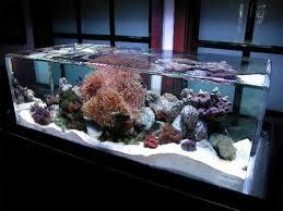 interior designs ideas lights cool wall fresh water aquariums