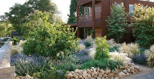 ornamental grasses landscaping landscape care ideas garden