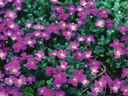 Best Plants For Rock Gardens The Best Plants For Rock Gardens Rock Garden Plants Drought