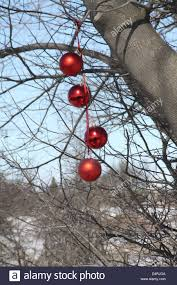 four big ornamental bulbs hanging from an outdoor tree