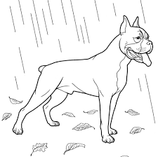 boxer dog coloring free printable coloring pages