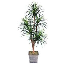 one 6 yucca artificial trees with 5 heads with no