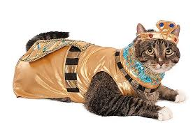 Cat Halloween Costumes Cats 10 Cat Halloween Costumes Hiss