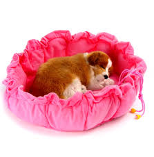 cute dog beds for small dogs in pool diy dog bed rehab