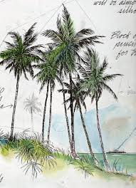 palm trees sketch by frederick j garner acuarela pinterest