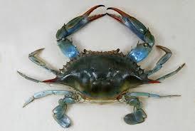 Pleins De Crabe Violonistes Très Les Animaux Et Leurs Messages Communication Annimale