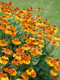 awesome looking flowers awesome autumn plants for your patio garden rentcafe rental blog