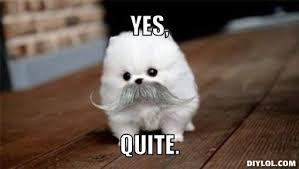 Yes This Is Dog Meme - jouissif la mort d hitler en images apar tv yes dog meme