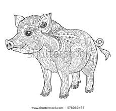 pig coloring book page doodle stock vector 576969463
