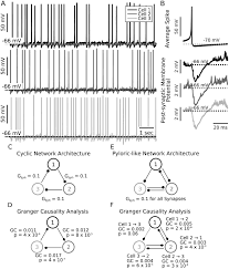 functional connectivity in a rhythmic inhibitory circuit using