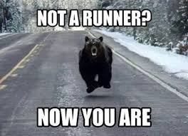 Funny Bear Memes - not a runner now you are bear chasing the camera guy quotes