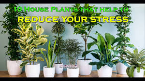 Best Houseplants 10 Best Houseplants That Clean The Air And Relieve Stress Youtube
