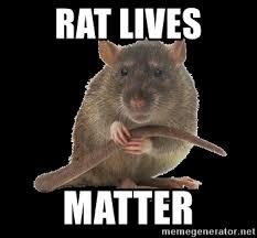 Rat Meme - rat lives matter bubonic rat meme generator
