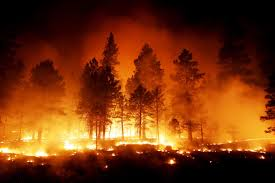 Wildfire Shot Drink by Life Behind The Wildfire Line Near Flagstaff Local Azdailysun Com
