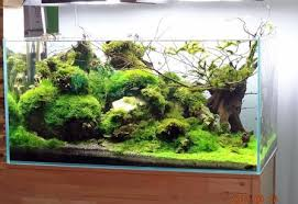 Aquarium Decor Ideas 50 Aquascape Aquarium Design Ideas Meowlogy