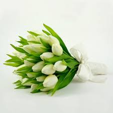white tulips of white tulips