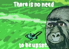 Gorilla Munch Meme - was gorilla munch the goat meme srs bodybuilding com forums